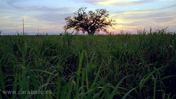 True Detective - Form and Void (Forma y vacío). El árbol en los campos de azúcar.